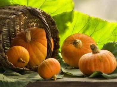Польза и вред тыквы: вывод