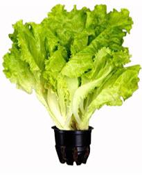 Польза салата для женщин