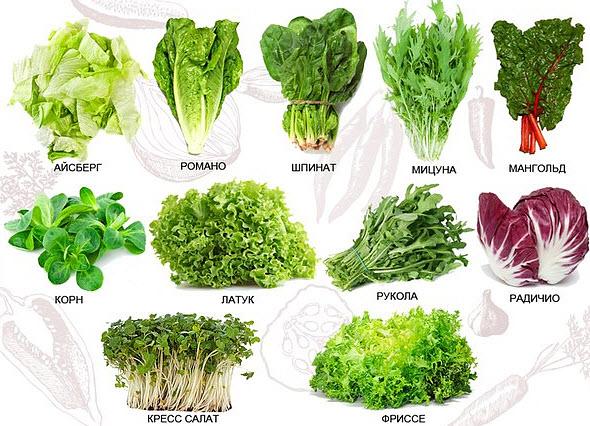 Другие виды полезной зелени