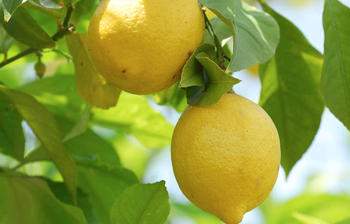 Чем полезен сок лимона?