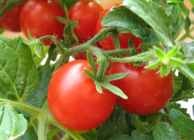 Полезны или вредны помидоры при беременности?